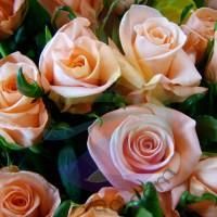 Rose Fragrance for Rainbow & RainMate