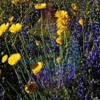 Wild Flower Fragrance for Rainbow & RainMate